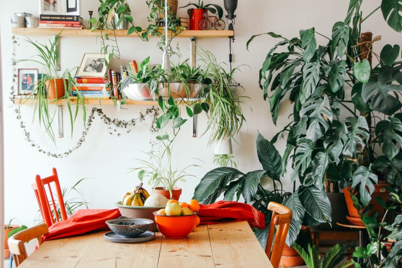 Tips on Bringing the Tropics Into Your Home