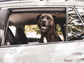 how to travel with a dog- toyota rav4 review