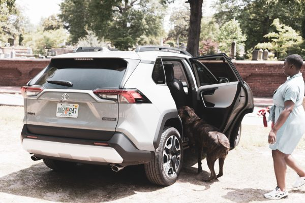 how to travel with a dog in the car- 2019 Toyota Rav4 Review